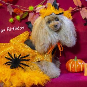 Happy Birthday Nameco