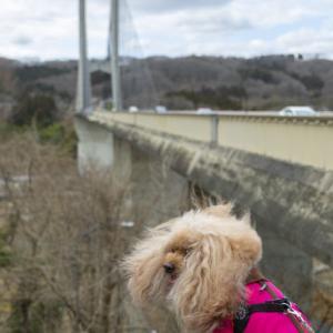 なめこさんのお散歩「橋を渡るコース」