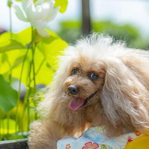 マクロおばちゃん写真集・・・・「河津桜と菜の花」