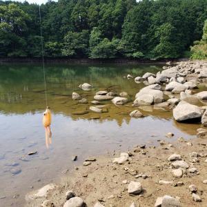 へっぽこ釣行記  6/25   野池(マッディー?)  大減水。干すのかな(悲)