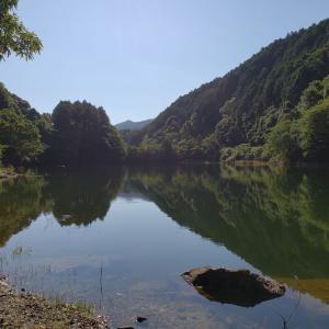 へっぽこ釣行記  7/15   小規模ダム(ステイン) トップウォーターをネチネチやる。