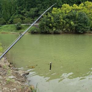 へっぽこ釣行記  9/7  小規模ダム(マッディー~ステイン) パイロットルアーはアビノー110Fが好き。