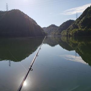 へっぽこ釣行記  9/9  小規模ダム(ステイン) 40センチ後半と50アップ。