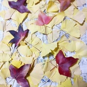 イチョウの葉で、防虫剤