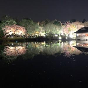 昭和記念公園、秋の夜散歩ライトアップ