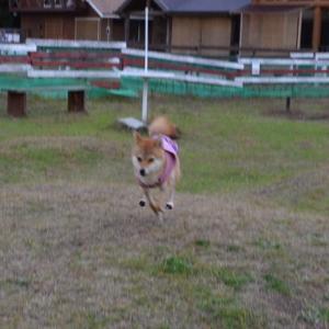 少し成長しました 〜飛ぶ犬〜