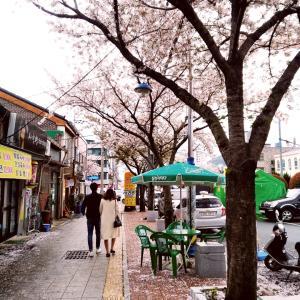 いつかの韓国▪️鎮海の桜祭り(市中散策)