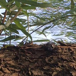 上海のカブトムシ採集