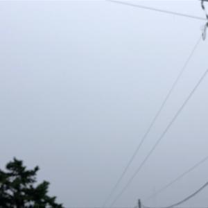 今日は一日中雨、寒い