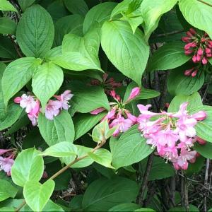里山の花たち