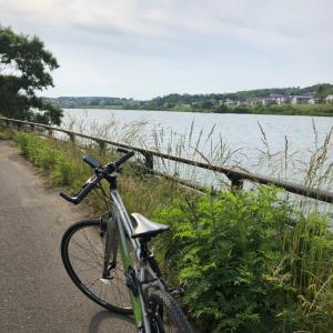 今日も楽しくポタリング  子吉川河口のハマヒルガオ