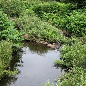 今日も楽しくポタリング  西目川まで 里山のマタタビ