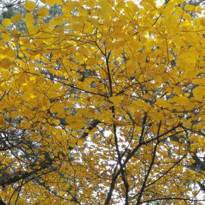 天津で紅葉その4、いや違う!北京「香山公園」 まで行っちゃった