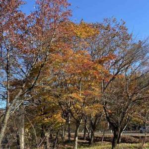紅葉の秋名もとい榛名山に行って来ました!