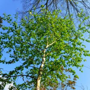 2020 KAZUMAの森~新緑~