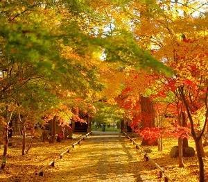 2020紅葉見頃予想🍁東京でも絶景スポット🍂都内で紅葉の映える写真が撮れるスポット5選