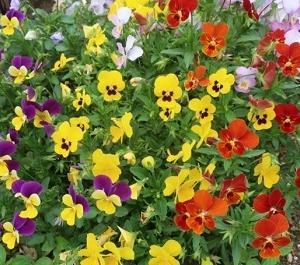 気付かずに過ごしてませんか?花が与える幸せ心理効果。あなたのお部屋が1番居たくなる空間に変わる