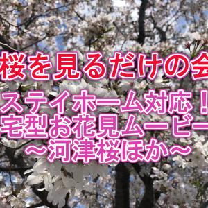 【桜を見るだけの会】ステイホーム対応!在宅型お花見ムービー!~河津桜ほか~