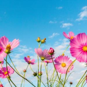 美と健康に関するブログ~☆Beauty Healthy Happy☆~