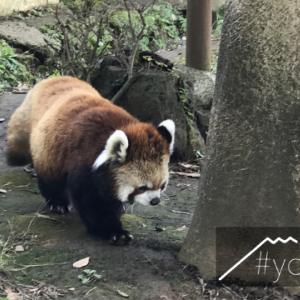 お正月は動物園に行こう!平川動物公園イベント
