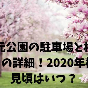 忠元公園の駐車場と桜まつりの詳細!2020年桜の見頃はいつ頃?