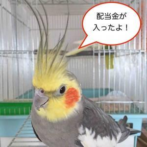 【配当金】オカダアイヨン(6294)