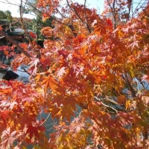 【ぶらり旅記事紹介(名古屋市内編)~2020年3月までの総集編③~】