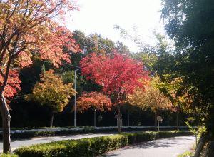 【紅葉の名古屋市千種区ぶらり旅①】