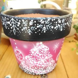 つくりこさんのクリスマスツリー鉢🎄&チビ寄せ植え