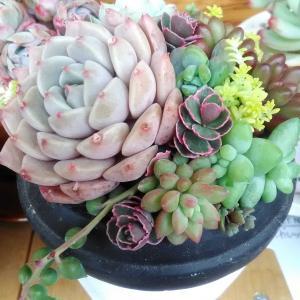 エスプレッソ鉢&メルカリ産の鉢に寄せ植え♡
