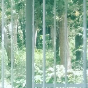 """アランフェス協奏曲〜第2楽章 続々編""""感動"""""""