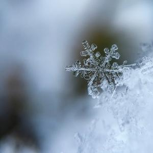剛直の杭を打ち込む霜の畑