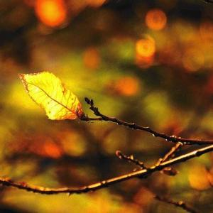冬紅葉荷風のなりは荷風のみ