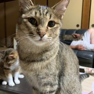 大物感漂う猫