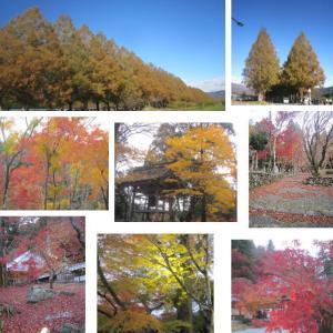 琵琶湖周辺紅葉散策