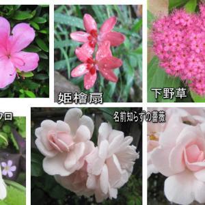 園芸作業日誌 5月 剪定と花がら摘み