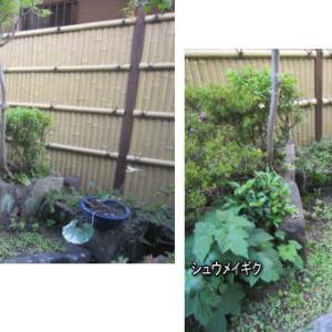 園芸作業日誌 2020/6-2