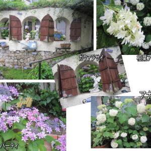 園芸作業日誌 6月3 一花咲かせたい
