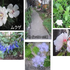 梅雨明けの庭仕事