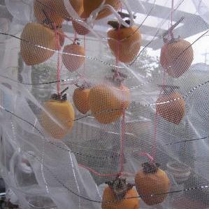 干し柿づくり