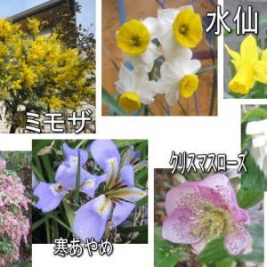 園芸作業日誌 3月