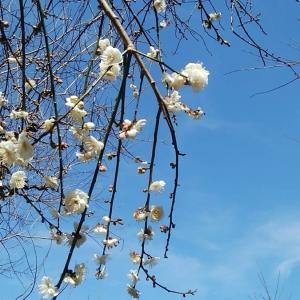 春によせる二編の詩