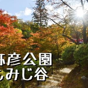 新潟県の代表的な紅葉スポット「弥彦公園もみじ谷」へ