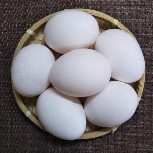 なんと卵になりました
