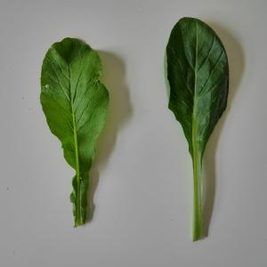 色の濃い野菜は栄養がある?知っておきたい安全な野菜選びの豆知識