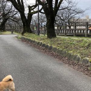 2020.01.14布瀬公園