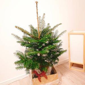 クリスマスツリーが北海道からやってきた!
