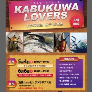 【イベント開催】カブクワ展示即売会決定『カブクワLOVERS』開催【千葉県です】