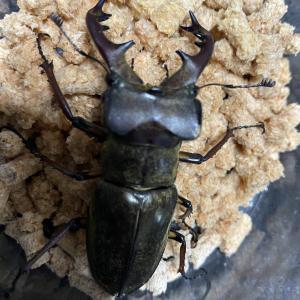 真夏の昆虫採集①と、オプチャプレゼント企画