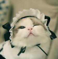 …🧙🏼♂️💨長老が🐈猫メイドパブへと🎵😛🥳🙄